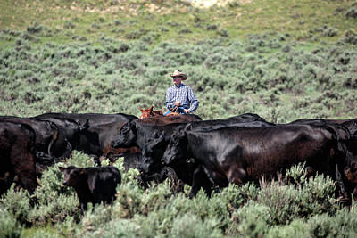 Bringing In The Herd Art Print
