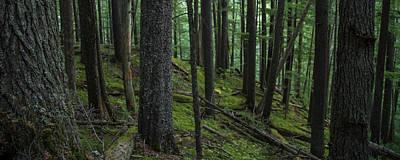 Photograph - British Columbia Forest by Ryan Heffron
