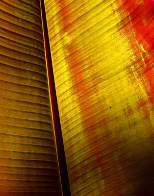 Digital Art - Broad Leaf by Timothy Bulone