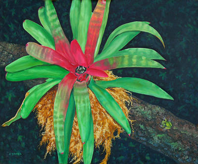 Epiphytic Bromeliads Painting - Bromeliad by Charles Yates
