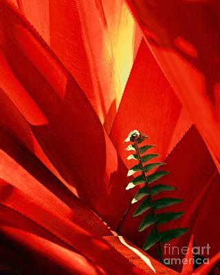 Bromeliad Spiney Leaves Art Print by Frank Wicker