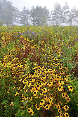 Photograph - Brookdale Black-eyed Susans by Ray Mathis