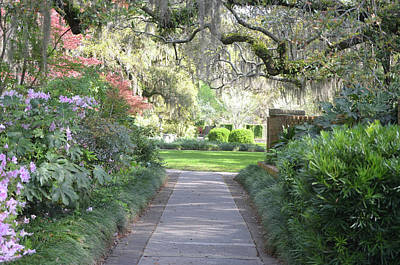 Photograph - Brookgreen Gardens 2 by Gordon Mooneyhan