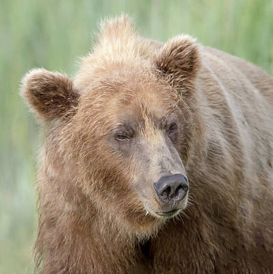 Photograph - Brother Bear  by Jack Bell