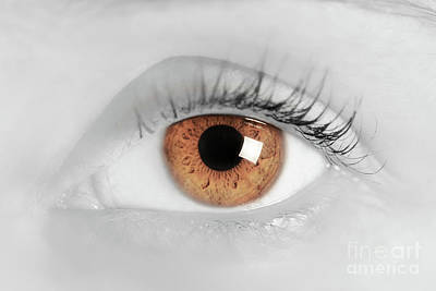 Eyelash Photograph - Brown Eye Of A Young Woman. Close-up. Focus On Iris by Michal Bednarek