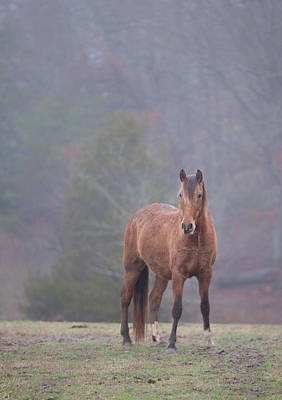 Photograph - Brown Horse In Fog by Jack Nevitt