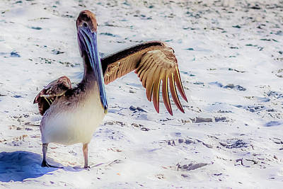 Photograph - Brown Pelican Wave by Randy Bayne