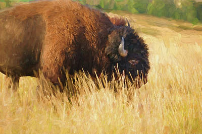 Photograph - Buff Buffalo Montana Painted by Rich Franco