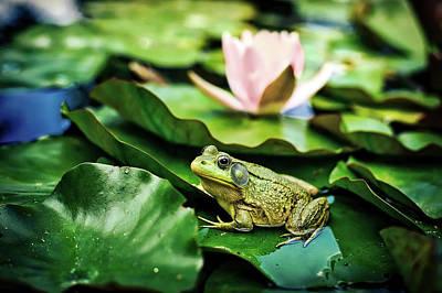 Photograph - Bullfrog by Jill Wellington