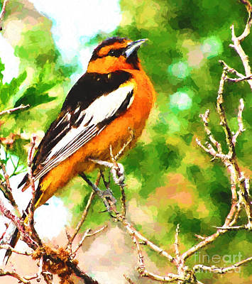 Digital Art - Bullock's Oriole by Steven Parker