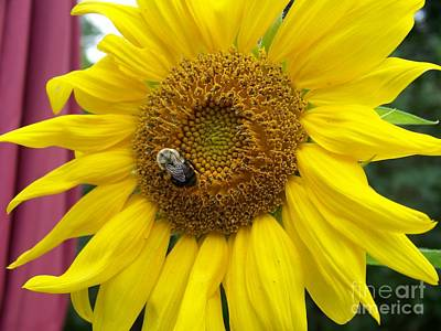 Photograph - Bumble Bee And Sunflower by Eunice Miller
