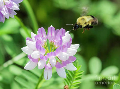 Photograph - Bumble Bee Pollinating A Flower by Ricky L Jones