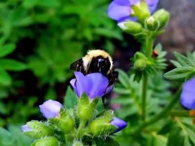 Photograph - Bumble Bee by Tiffany Erdman