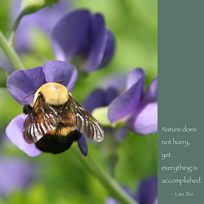 Photograph - Bumble Bee With Zen Quote by Heidi Hermes