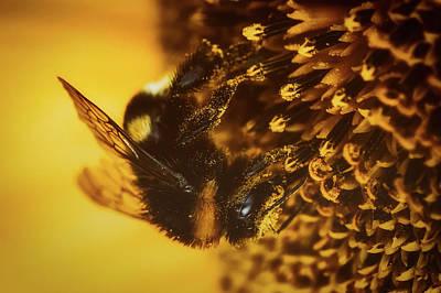Photograph - Bumblebee Foray by Hans Benn