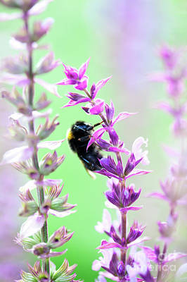 Photograph - Bumblebee by Kati Finell