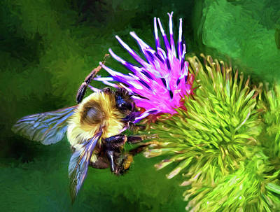 Photograph - Bumbling In The Burdock 2 - Paint by Steve Harrington
