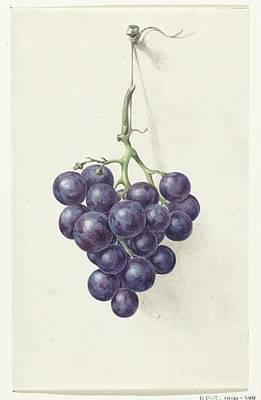 Bunch Of Blue Grapes Print by Jean Bernard