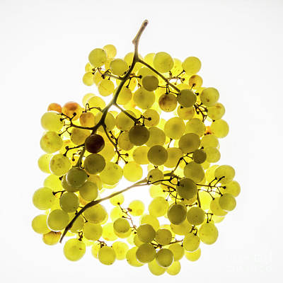 Bunch Of White Grapes Art Print by Bernard Jaubert