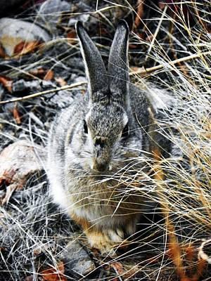 Photograph - Bunny by Joseph Frank Baraba