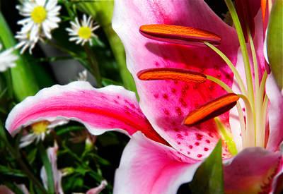 Photograph - Burning Pink by Bibi Rojas