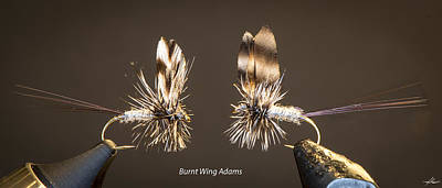 Photograph - Burnt Wing Adams by Phil Rispin