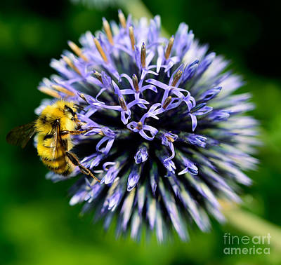 Photograph - Busy Bee 2 by Terry Elniski