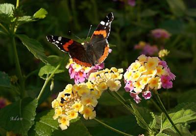 Art Print featuring the photograph Busy Butterfly Side 2 by Felipe Adan Lerma
