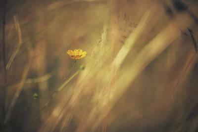 Buttercup Photograph - Buttercup by Chris Fletcher