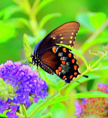 Butterflie Original