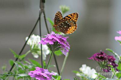 Photograph - Butterflies Are Free by Barbara S Nickerson