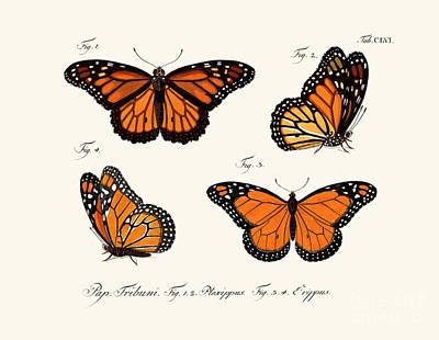 Butterflies Art Print by German School