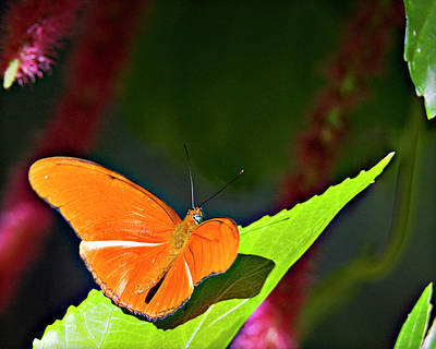 Photograph - Butterfly 22 by Walter Herrit
