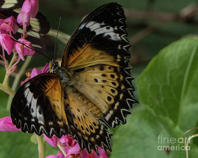 Photograph - Butterfly 6 by Christy Garavetto