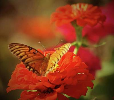 Photograph - Butterfly And Flower II by Donna G Smith