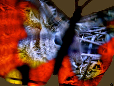 Aesthetic Landscape Image Digital Art - Butterfly Animals  Collection  by Debra     Vatalaro