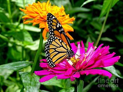 Photograph - Butterfly Beauty # by Ed Weidman