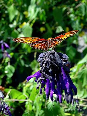 Photograph - Butterfly Beauty #2 by Ed Weidman