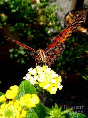 Photograph - Butterfly Beauty #3 by Ed Weidman
