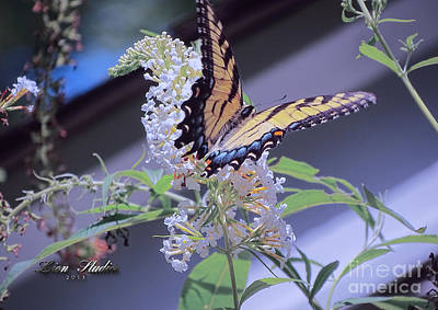 Butterfly Bush ,butterfly Included Art Print