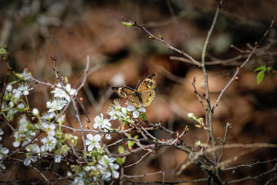 Photograph - Butterfly by Doug Long