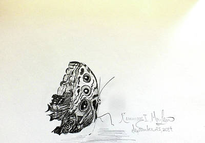 Drawing - Butterfly Drawing by Kimmary I MacLean