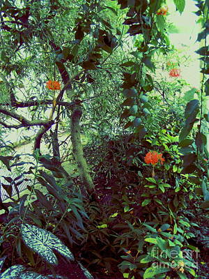 Photograph - Butterfly Garden by Nancy Kane Chapman