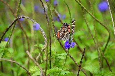 Photograph - Butterfly In The Garden  by Jenny Regan