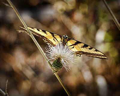Photograph - Swallowtail Butterfly by Kelley King