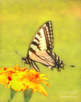 Photograph - Butterfly by Marion Johnson