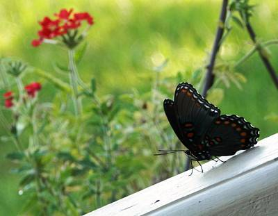 Photograph - Butterfly Moment by Belinda Lee