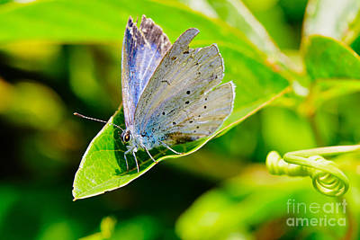 Photograph - Butterfly On A Leaf by Nick  Biemans