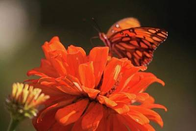 Photograph - Butterfly On Flower by Donna G Smith