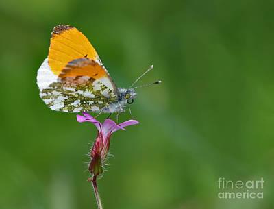Bug Photograph - Butterfly On Flower by Jan Boesen